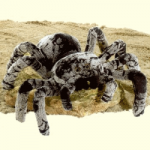 Plush Tarantula by Fiesta